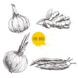 Hand gezeichnete gesetzte Illustration der Skizzenart von verschiedenen Gewürzen Knoblauch, Ingwerwurzel, Zwiebel und glühende Pa Stockfotografie