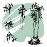 Hand gezeichnete gesetzte Tintenillustration der Hyazinthe, Schwarzweiss, Florenelement für Ihr Design lizenzfreie stockfotografie