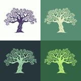 Hand gezeichnete grafische Olivenbäume stellten auf verschiedene Hintergründe ein Vektor Abbildung
