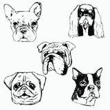 Hand gezeichnete Hundeporträts auf weißem Hintergrund Stockfoto