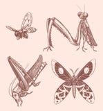 Hand gezeichnete Insekten Lizenzfreie Stockbilder