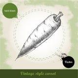 Hand gezeichnete Karotte Organisches eco Gemüselebensmittelhintergrund Lizenzfreie Stockfotos