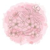Hand gezeichnete Kirschblüte auf Aquarellnachahmung Stockbild