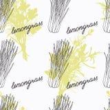 Hand gezeichnete Lemongrasniederlassung und handgeschriebenes Zeichen vektor abbildung