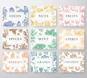 Hand gezeichnete Nüsse, Gewürze und Beeren mit Früchten und Kokosnuss-Karten-Satz Abstrakte Vektor-Skizzen-Hintergrund-Sammlung stock abbildung