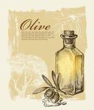 Hand gezeichnete Olive Lizenzfreie Stockfotografie