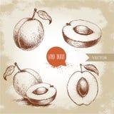 Hand gezeichnete reife Aprikosen stellten auf Weinlesehintergrund ein Lizenzfreie Stockfotografie