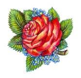 Hand gezeichnete Rotrose auf weißem Hintergrund Stockfoto