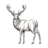 Hand gezeichnete Rotwild stock abbildung