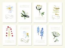 Hand gezeichnete Sammlung von romantischem Blumen Stockfoto