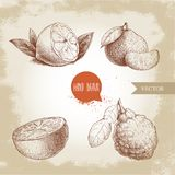 Hand gezeichnete Skizzenartzitrusfrüchte eingestellt Zitrone halb, Kalk, Tangerine, Mandarine, orange Scheibe und Bergamotte mit  Lizenzfreie Stockbilder