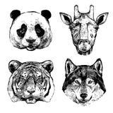 Hand gezeichnete Tier-Porträts stock abbildung