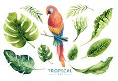Hand gezeichnete tropische Anlagen des Aquarells eingestellt und Papagei Exotisches PA Lizenzfreie Stockfotografie