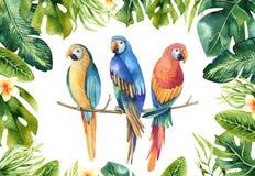 Hand gezeichnete tropische Anlagen des Aquarells eingestellt und Papagei Exotisches PA lizenzfreie abbildung