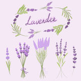 Hand gezeichnete Vektorillustration des Lavendels Lizenzfreies Stockbild