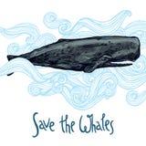 Hand gezeichnete Wal-Illustration in den blauen Wellen Außer den Walen Lizenzfreie Stockbilder