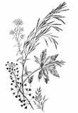 Hand gezeichnete wilde Getreide Stockfotos