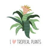 Hand gezeichnete wilde tropische Zimmerpflanze Skandinavische Artvektorillustration mit aechmea vektor abbildung