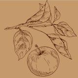 Hand gezeichneter Apfel und Blattentwurf Tragen und die Blätter in der Linie Kunstart lokalisiert auf braunem Hintergrund Früchte Stockbilder