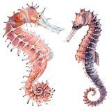 Hand gezeichneter Aquarell Seahorse Stockfotografie