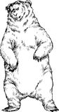 Hand gezeichneter Bär Lizenzfreies Stockbild