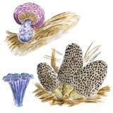 Hand gezeichneter gesetzter Pilz des Aquarells Botanische Illustration lokalisiert auf weißem Hintergrund Stockfoto