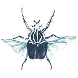 Hand gezeichneter Goliath-Käfer Stockfoto