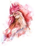 Hand gezeichneter Illustrationsaquarellhahn Stockbild