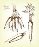 Hand gezeichneter Karottensatz Stockfoto