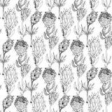 Hand gezeichneter nahtloser Mustervektor des Protea Schwarzweiss stock abbildung