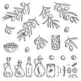 Hand gezeichneter olivgrüner Grafiksatz Auch im corel abgehobenen Betrag stock abbildung