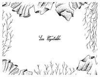 Hand gezeichneter Rahmen des Purpurtangs und der Mozuku-Meerespflanze Lizenzfreies Stockbild