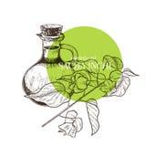Hand gezeichneter Satz ätherische Öle Vektor sacha inchi Serum Medizinisches Kraut mit Glastropfflasche Gravierte Kunst Gut lizenzfreie abbildung
