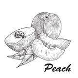 Hand gezeichneter Skizzenartpfirsich Reifer ganzer Pfirsich und Pfirsichviertel frischer Bauernhof trägt Vektorillustration Früch Lizenzfreie Stockfotos