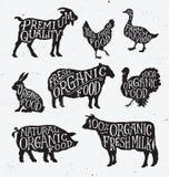 Hand gezeichneter Vieh-Satz Stockfotos