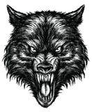 Hand gezeichneter Wolf Linework Vector Stockfotos