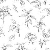 Hand gezeichnetes Ficus-Niederlassungs-Muster Stockfotografie