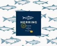 Hand gezeichnetes Fisch-Vektor-Hintergrund-Muster Abstrakte Paket-Skizzen-Karte oder Abdeckung Schablone mit modischer Typografie Stockbilder
