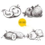 Hand gezeichnetes Skizzenartgemüse eingestellt Geschnittene Tomaten, Zwiebeln, Gurken und Knoblauch Stockfotografie