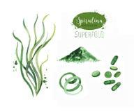 Hand gezeichnetes spirulina Meerespflanzenpulver Lokalisierte Spirulina-Algen, Pillen, Kapseln und Pulverzeichnung auf weißem Hin stock abbildung