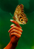 Hand With Giant Butterfly Royalty Free Stock Image