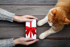 Hand with gift box and ginger cat. Female hand with gift box and ginger cat on grey background stock images