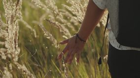 Hand of a girl close-up passing through a field of wheat. A girl walking and passing her hand over the yellow spikelets