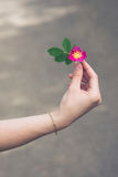 The hand of the girl with the golden chain keeps the redflower briar against blurred background with copyspace.  Stock Photo