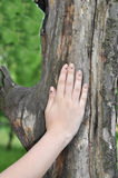 Hand of the girl on  old tree Stock Image
