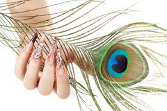 Hand of the girl with a peacock feather Stock Photos