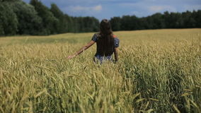 Hand of girl in the wheat field. stock video footage
