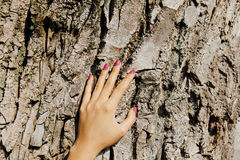 Hand girl whitens the trees. Protect plants from harmful insects Stock Photography
