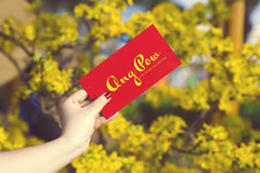 Hand give money in red envelopes - ang pow or red packet to some. One for Chinese New Year / Tet Holiday on nature yellow flowers background - Hoa Mai tree Ochna royalty free stock image
