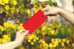 Hand give money in red envelopes - ang pow or red packet to some. One for Chinese New Year / Tet Holiday on nature yellow flowers background - Hoa Mai tree Ochna royalty free stock photos